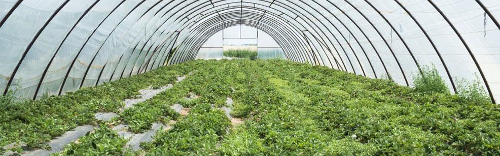 خط تولید فیلم کشاورزی